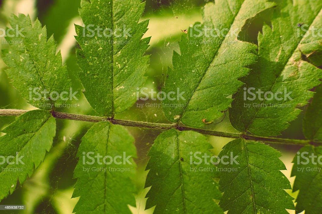 Винтажный мягкий зеленый папоротник Лифс на размытый фон с боке стоковое фото