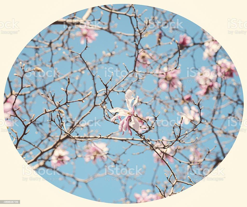 Vintage spring stock photo