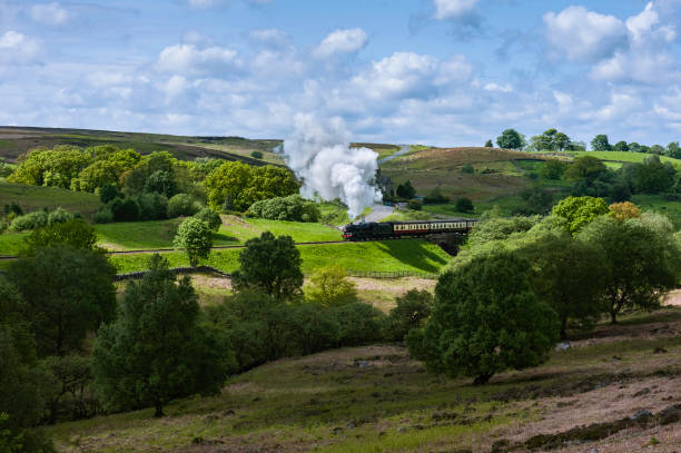 Vintage steam train in North York Moors, Yorkshire, UK. Goathland, Yorkshire, UK. A vintage steam train makes it's way across the heart of tyhe  North York Moor with rolling landscape, flora, and a scattering of sheep near Goathland, Yorkshire, UK. moor stock pictures, royalty-free photos & images