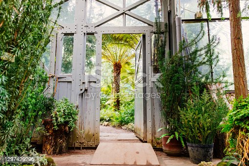 istock Vintage steel and glass doorway in greenhouse with lush plants under glass ceiling 1297429295