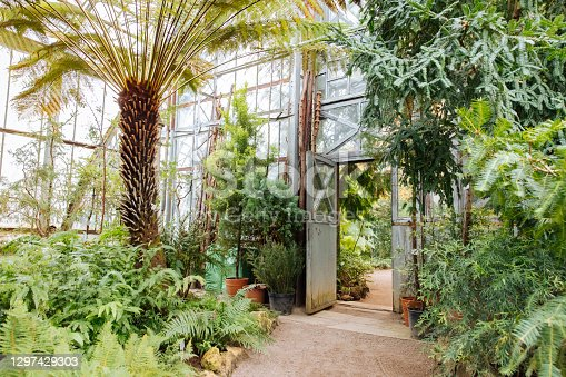 istock Vintage steel and glass doorway in greenhouse with lush plants under glass ceiling 1297429303