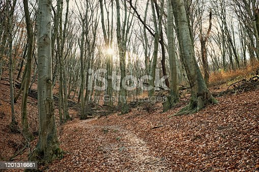 istock Vintage style artistic photo of a forest and pathway with bare trees and sun ray light 1201316661