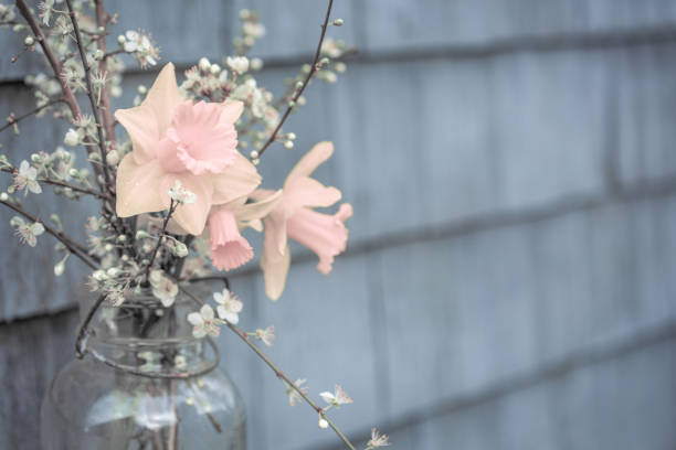 Vintage Style Flowers in Mason Jar, soft focus background, copy space, pastel muted colors, daffodils and apple blossoms stock photo