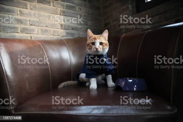 Vintage style home cat picture id1257274408?b=1&k=6&m=1257274408&s=612x612&h=l6a2yogawnfk3qypmrjbzb7xxv1idak3wc oawcpjpw=