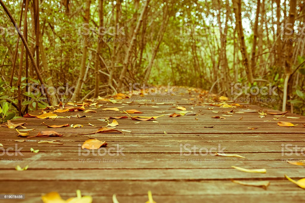 Vintage style photo of mangrove forest with wood walkway bridge. stock photo