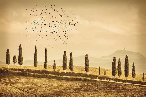 Vintage Tuscany Landscape of cypresses trees and birds Vintage Tuscany Landscape of country road, cypresses trees and birds - Tuscany nature, Pienza, Italy, Europe pienza stock pictures, royalty-free photos & images