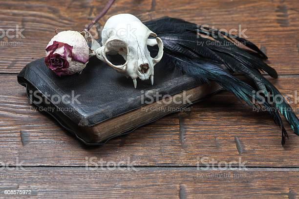 Vintage witchcraft still life picture id608575972?b=1&k=6&m=608575972&s=612x612&h=jmgvhznrff7pxfm8a7rgxes litrgqtmljjw9fsgnf8=