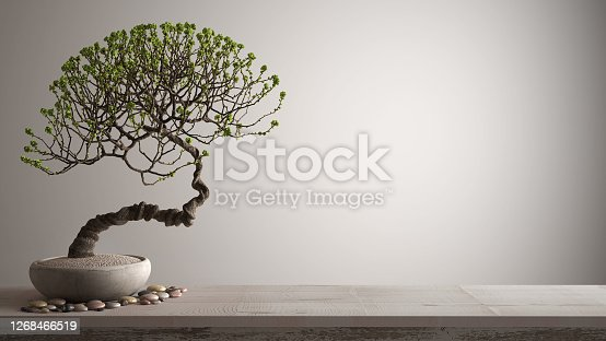 Vintage wooden table shelf with pebble and potted bloom bonsai, green flowers, white background with copy space, zen concept interior design