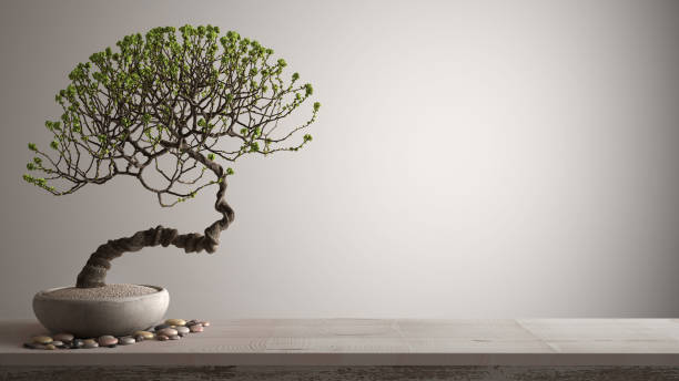 Vintage wooden table shelf with pebble and potted bloom bonsai, green flowers, white background with copy space, zen concept interior design stock photo