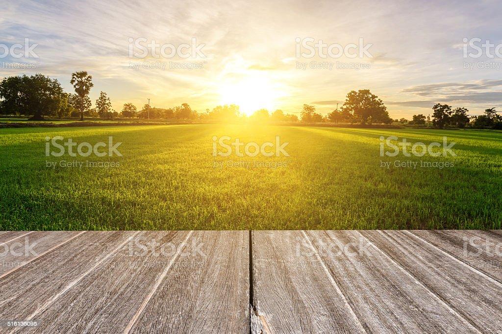 Textura de madera Vintage con arroz campo en la mañana. - foto de stock