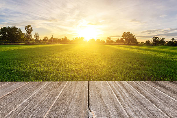 vintage wooden texture with rice field in the morning. - organic farm stock photos and pictures