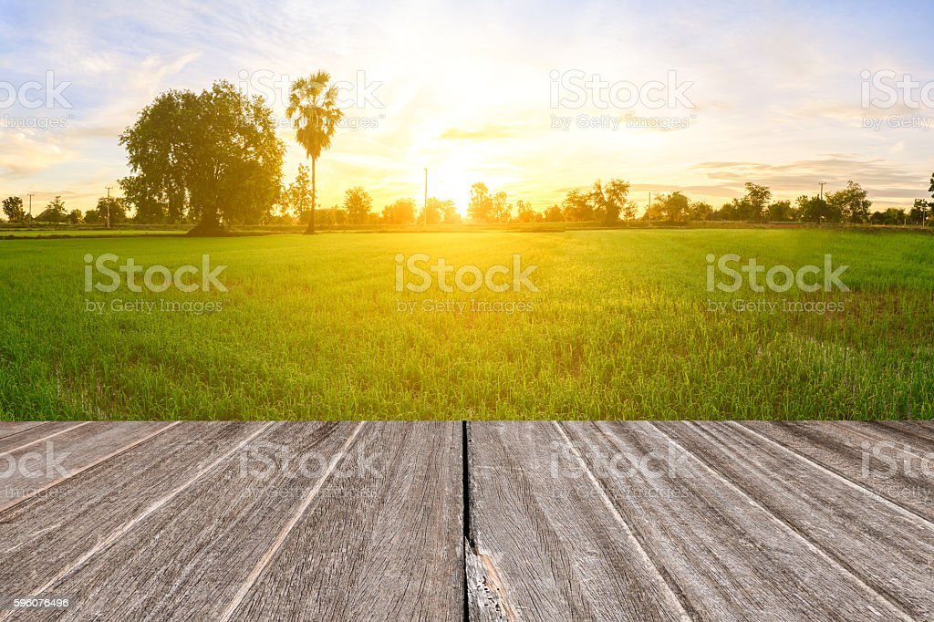 Vintage wooden texture with rice field in the morning. royalty-free stock photo