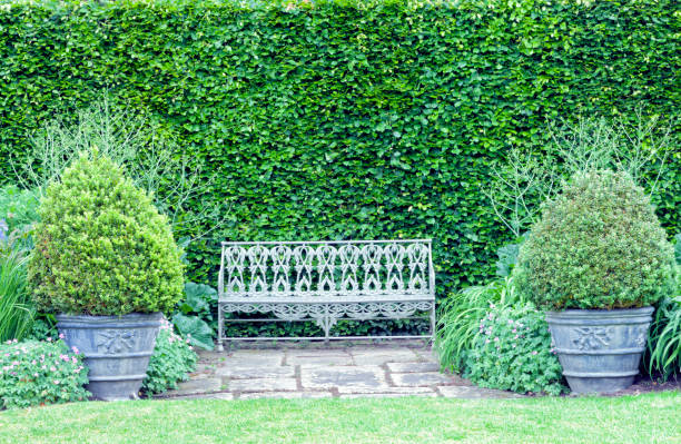 vintagel bench between two topiary pots by tall hedge wall, in summer garden . - evergreen plant stock photos and pictures