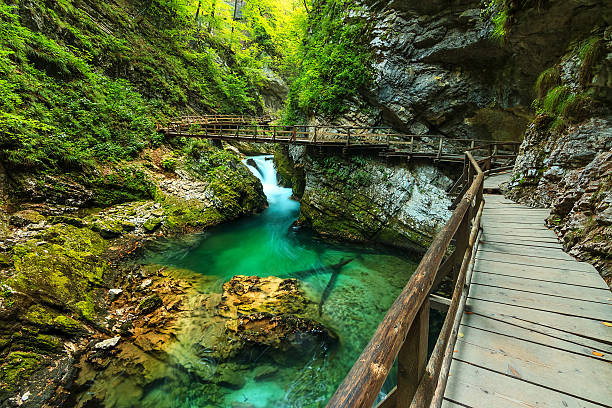vintgar gorge and green river,bled,triglav- slovenia - 斯洛維尼亞 個照片及圖片檔