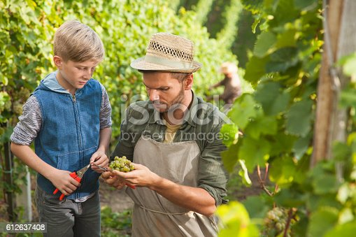 540524550 istock photo Vintner family tradition 612637408