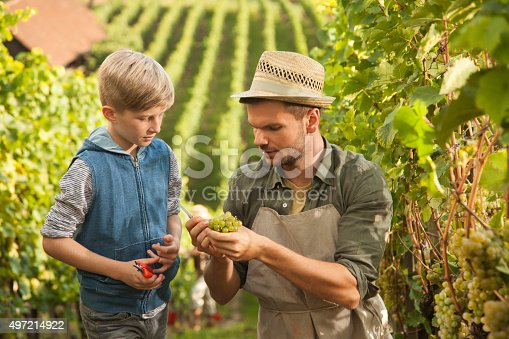 540524550 istock photo Vintner teaching his son about grapes 497214922