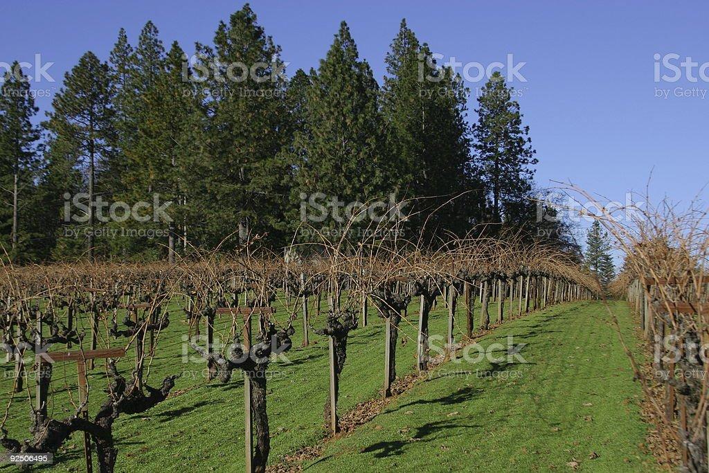 vinyard in Glass Mountain, Napa Valley royalty-free stock photo