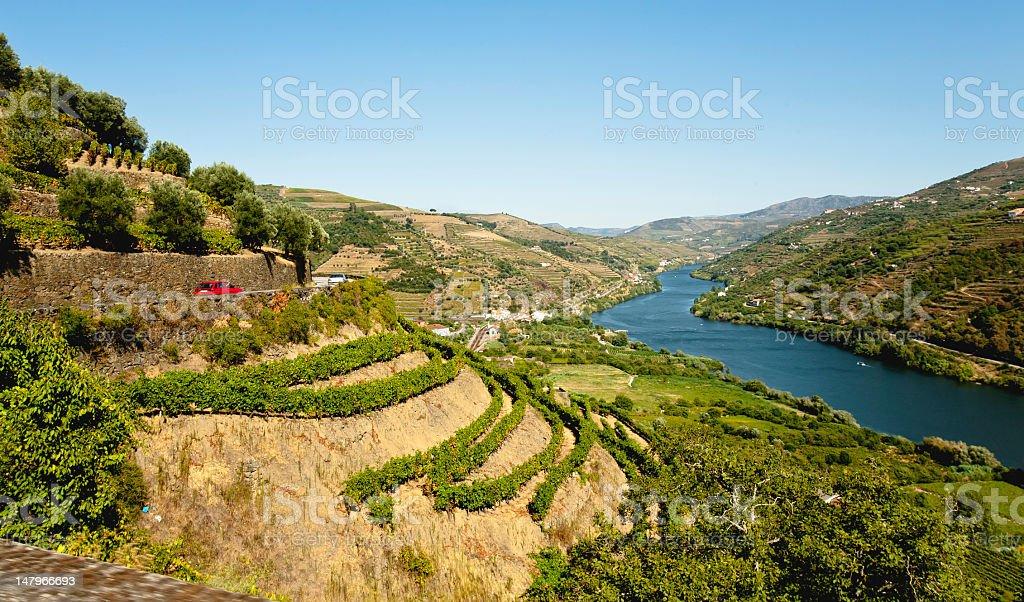 Vinyards at Douro stock photo