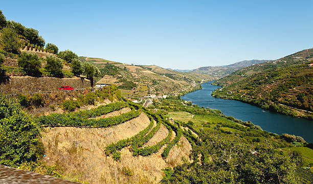 Vinyards at Douro Image captured from the road some kilometers to the west of Oporto, the image shows the Douro river and his vinyards. estudio stock pictures, royalty-free photos & images