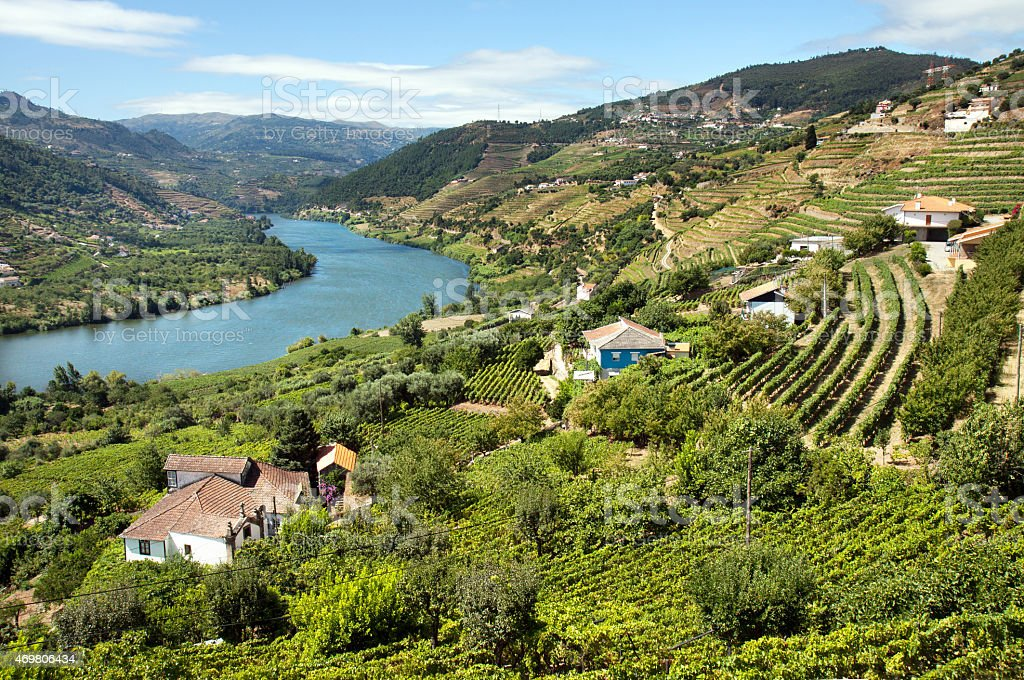 Vinyards in the Douro valley in Portugal stock photo