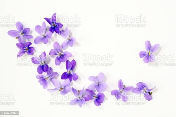 Viola blossoms picture id664738370?b=1&k=6&m=664738370&s=612x612&h=dwo3lijiuo jteaiv7ednktphwfugemceszoiis5dj8=