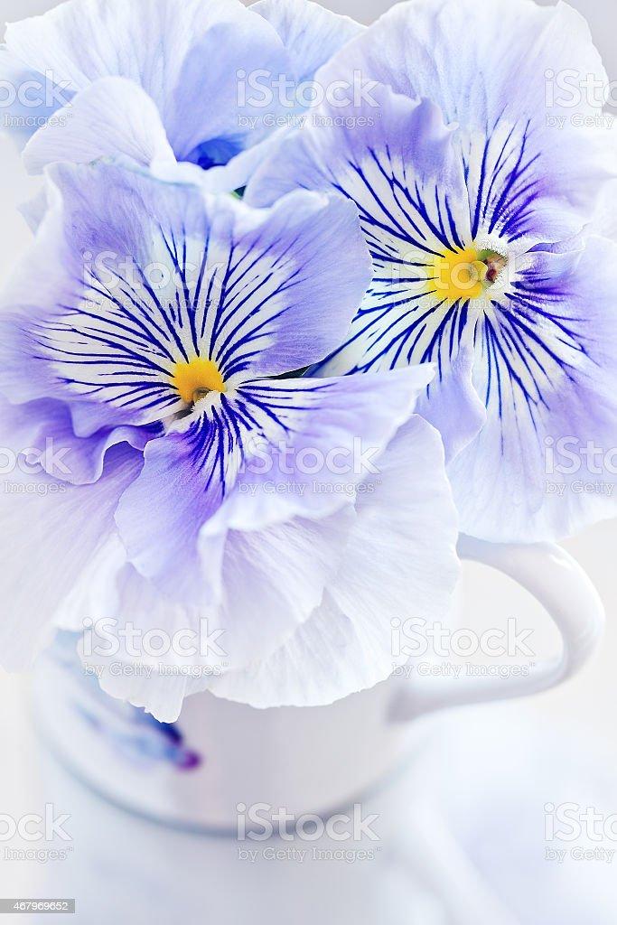 Viola Blumen Lizenzfreies stock-foto