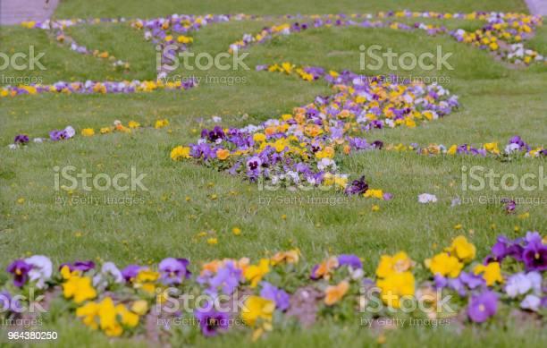 Foto de Viola Tricolor Canteiro De Flores No Parque Em Filme e mais fotos de stock de Amarelo