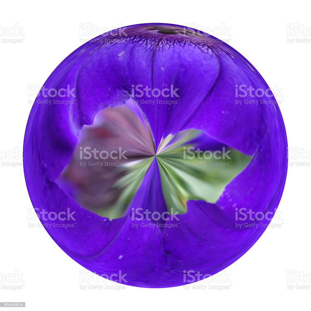Violate Flower in the glass ball on white background stock photo