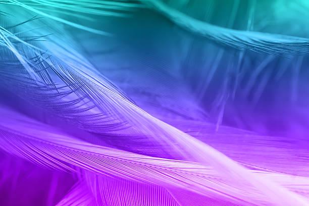 violet and green color trends chicken feather texture background - pfau bilder stock-fotos und bilder