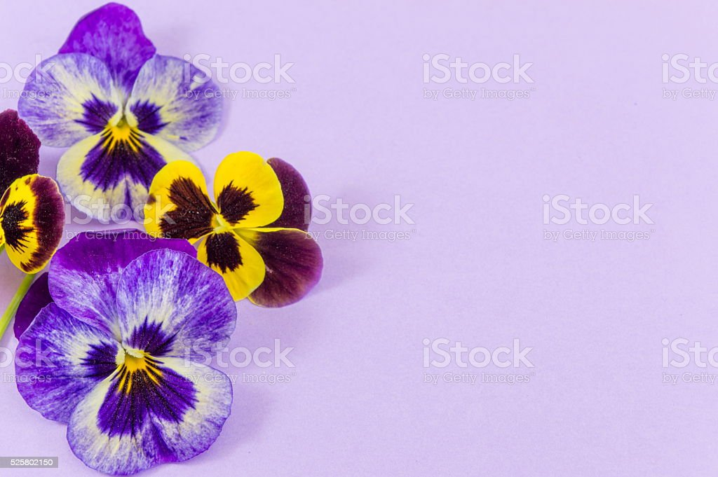 Violet and yellow flowers stock photo