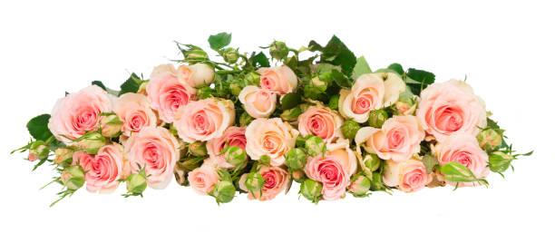 Violet blooming roses picture id886199328?b=1&k=6&m=886199328&s=612x612&w=0&h=o7tdsyrtigbhua1wyo6iix8a7esdl39u orzoayqzw4=