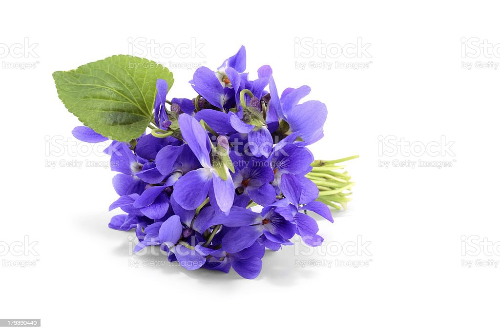 Violet bouquet isolated on white stock photo