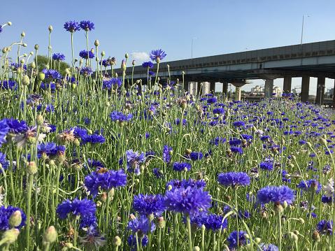 Violet Kleur Bloemen Stockfoto en meer beelden van Achtergrond - Thema