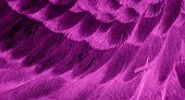 istock Violet feather pigeon macro photo. texture or background 1311607587