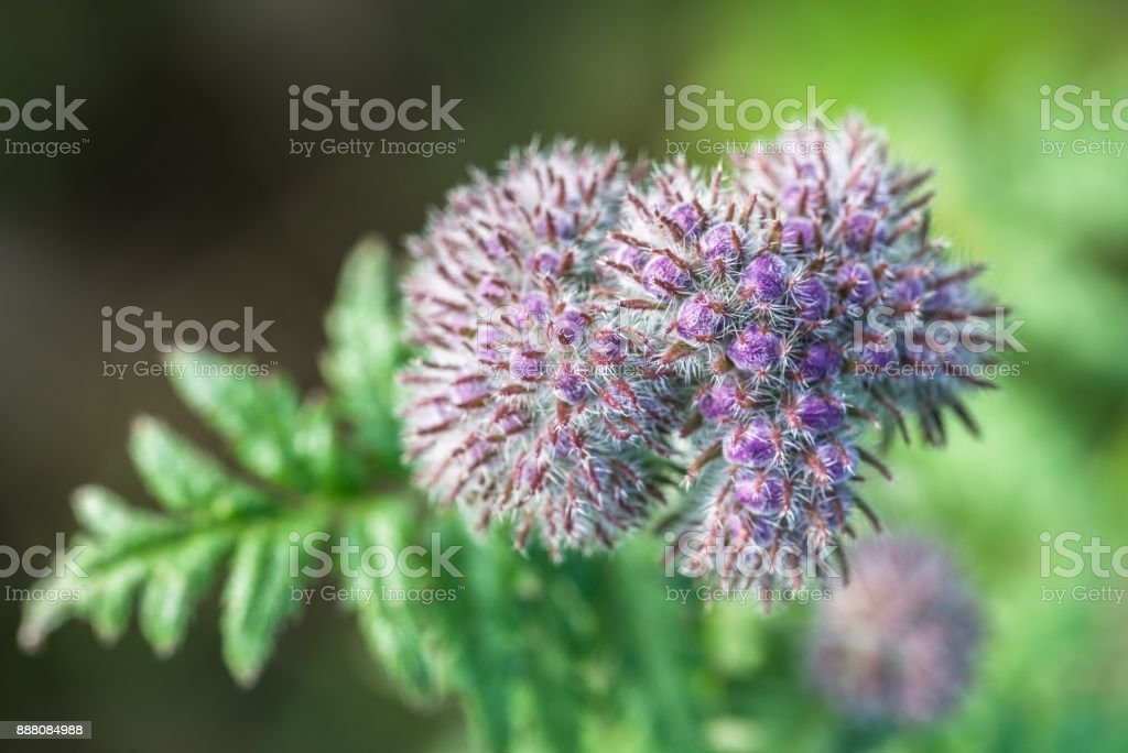 Violet flower on a meadow stock photo