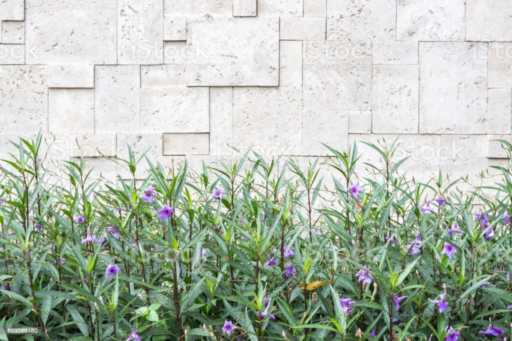 Violet flower on brick wall background stock photo
