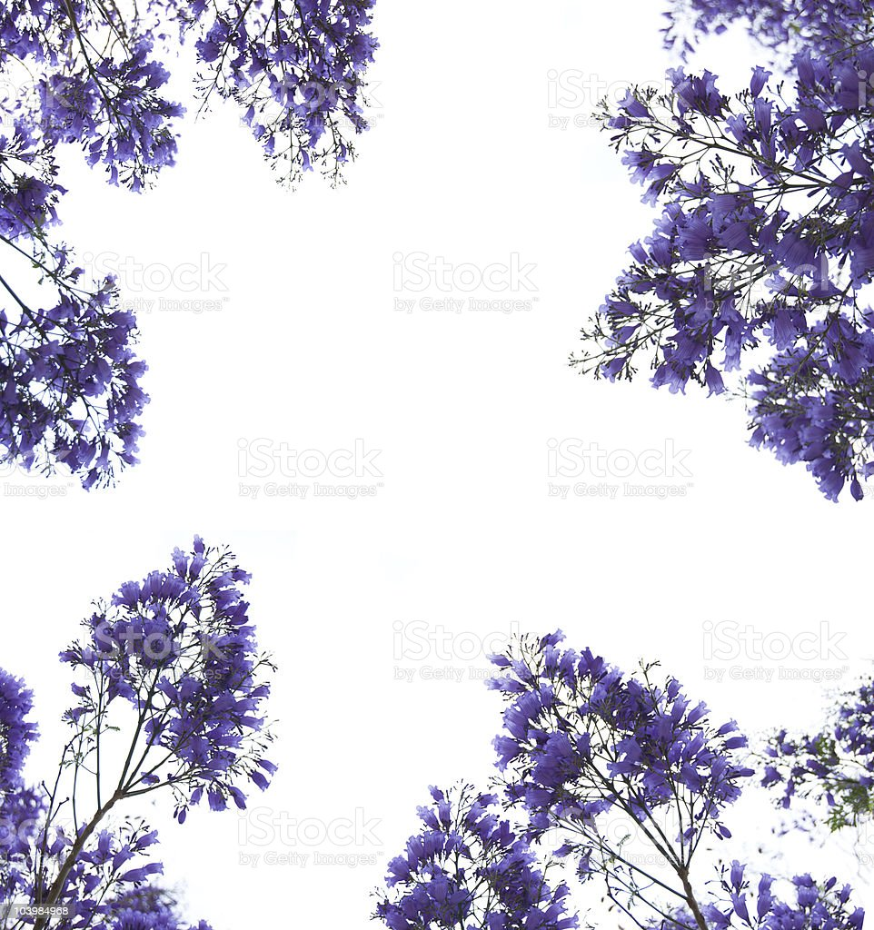 Violet flowers frame stock photo