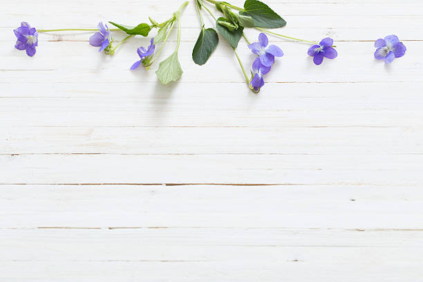 violet flowers on old wooden background stock photo