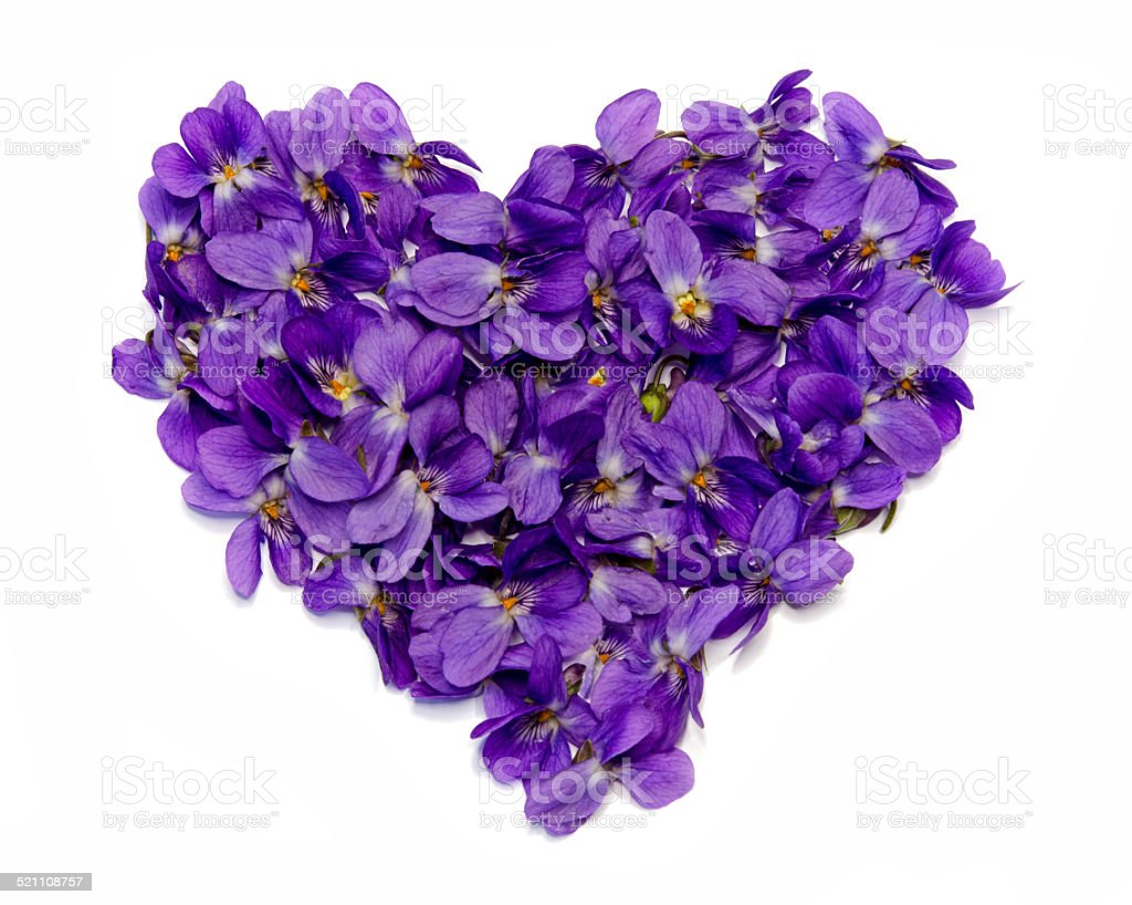 Violet Heart stock photo