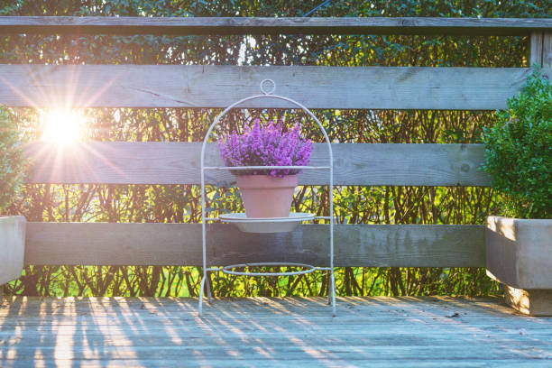 Violet heather in a clay pot on a wooden terrace stock photo