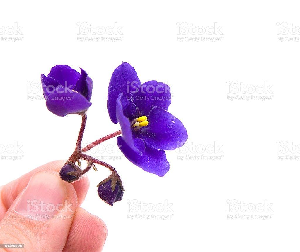 violet – Foto