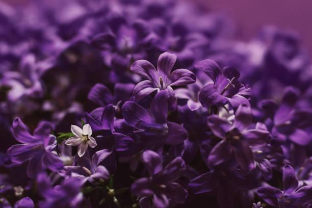 Violet picture id921370862?b=1&k=6&m=921370862&s=612x612&w=0&h=m3t8jazcwfhu msm7ntshdajk3til7wbn1 udrbvjfi=
