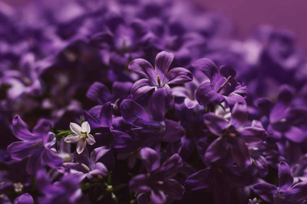violet - violet stock photos and pictures