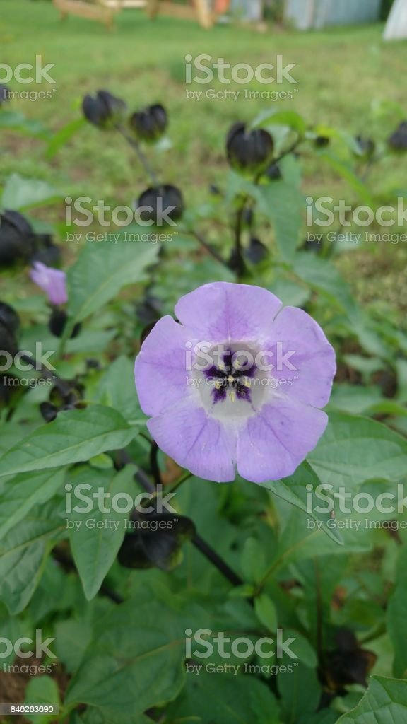 Violet ring stock photo