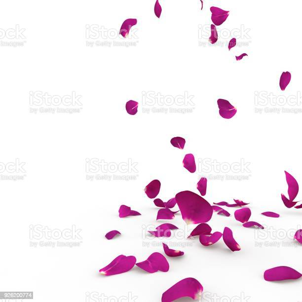 Violet rose petals fall to the floor picture id926200774?b=1&k=6&m=926200774&s=612x612&h=r9 djne9ge8ix4hwbkjljka64t4yhwonlvll0qicw3k=