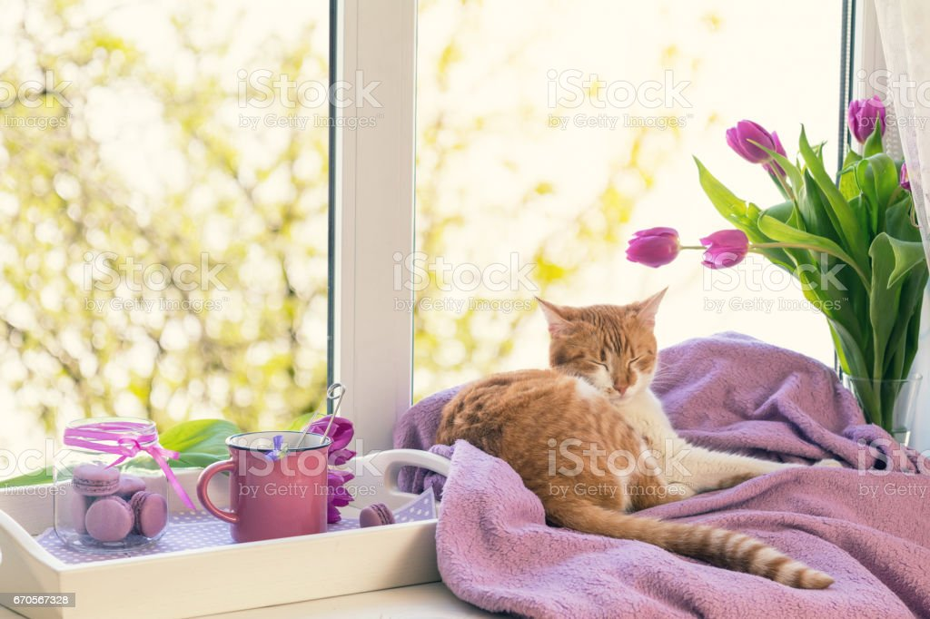 Violet sunshine cozy home concept stock photo