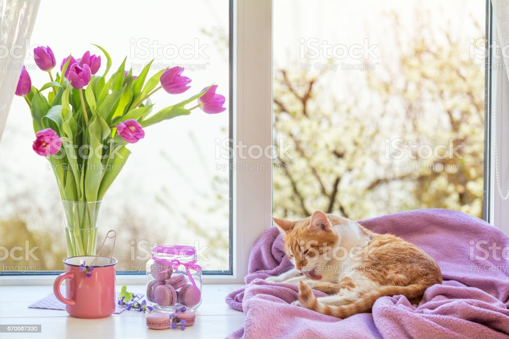 Violet sunshine cozy home concept royalty-free stock photo