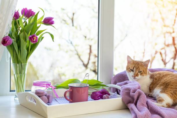 Violet sunshine cozy home concept stock photo