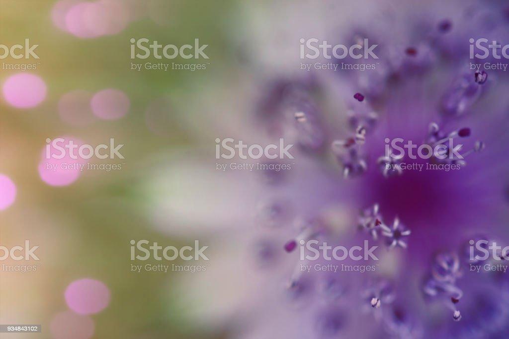 보라색 야생 꽃 세부 사항 - 로열티 프리 0명 스톡 사진
