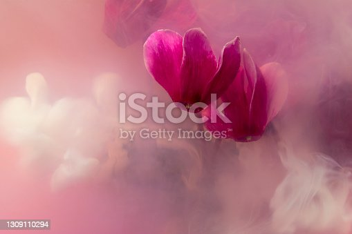 istock violets cyclamen colorful clouds 1309110294